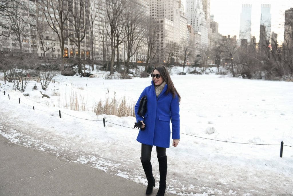 Cobalt Blue Coat in Central ParkCobalt Blue Coat in Central Park