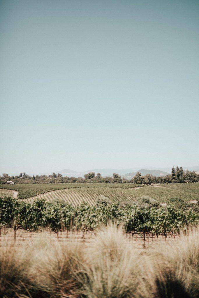 MacRostie Vineyards - Healdsburg, CA