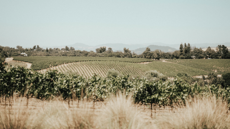 City Guide: Healdsburg, California
