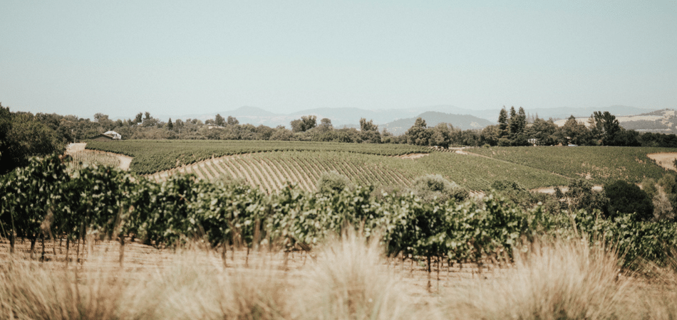 Healdsburg Travel Guide - Adored by Alex