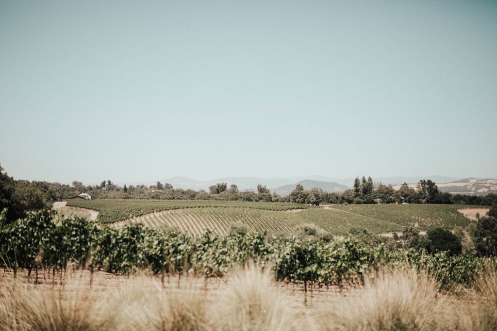 Healdsburg vineyards, Russian River Valley