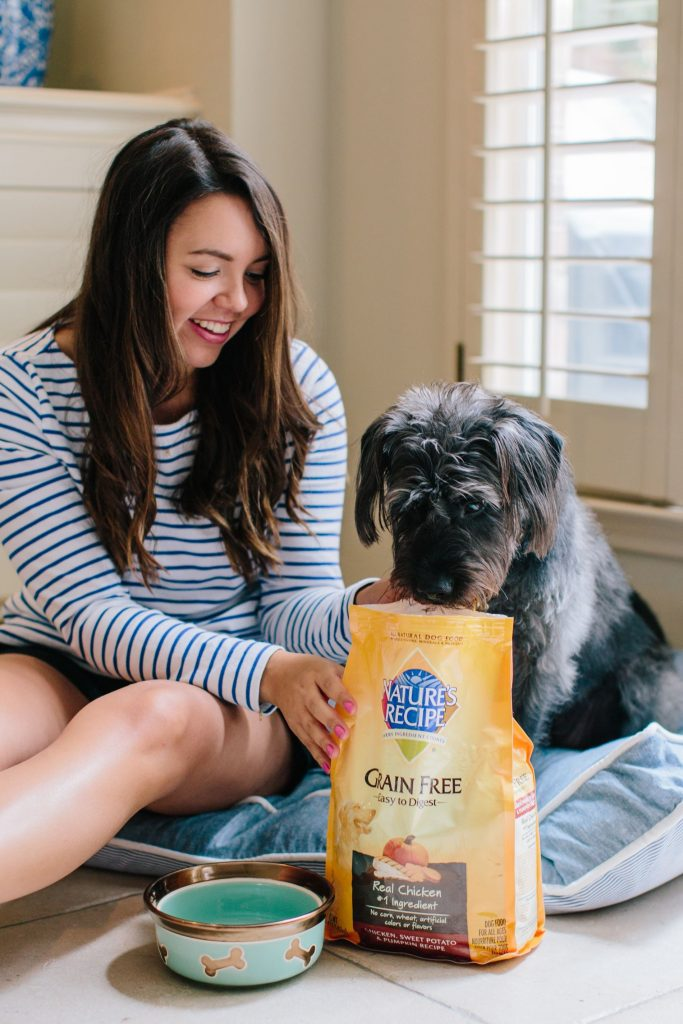 Dog food tips, switching your dog's food