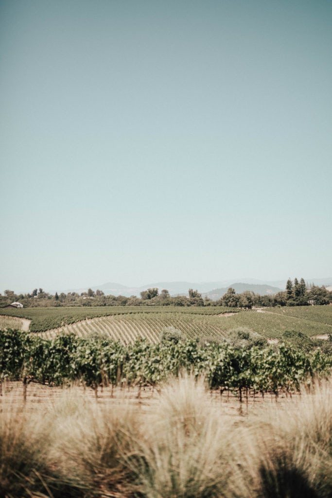 MacRostie vineyards, Healdsburg, California