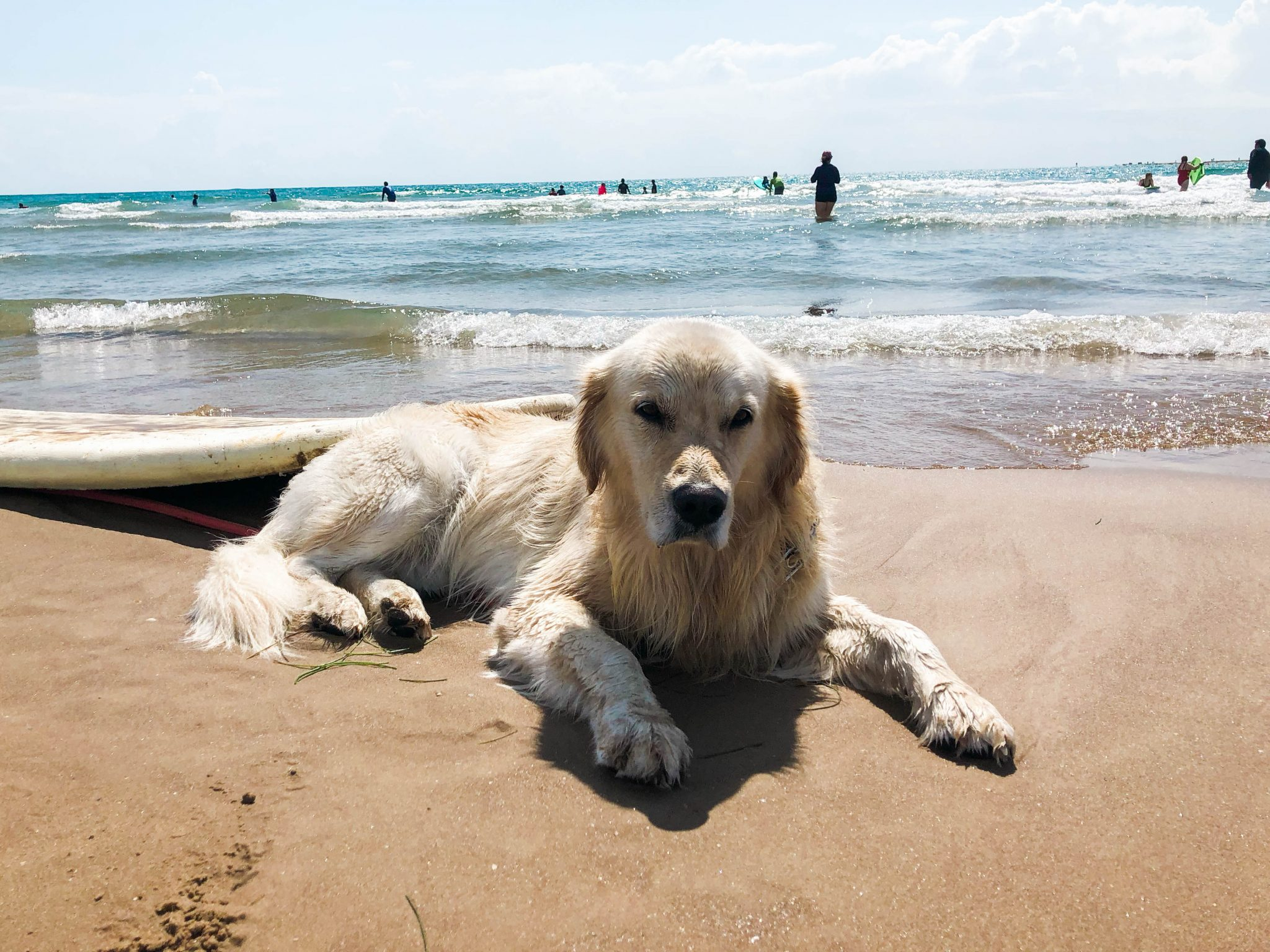 dogs of South Padre Island