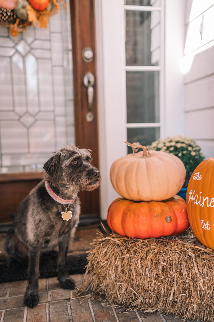 Easy and budget-friendly fall porch styling ideas