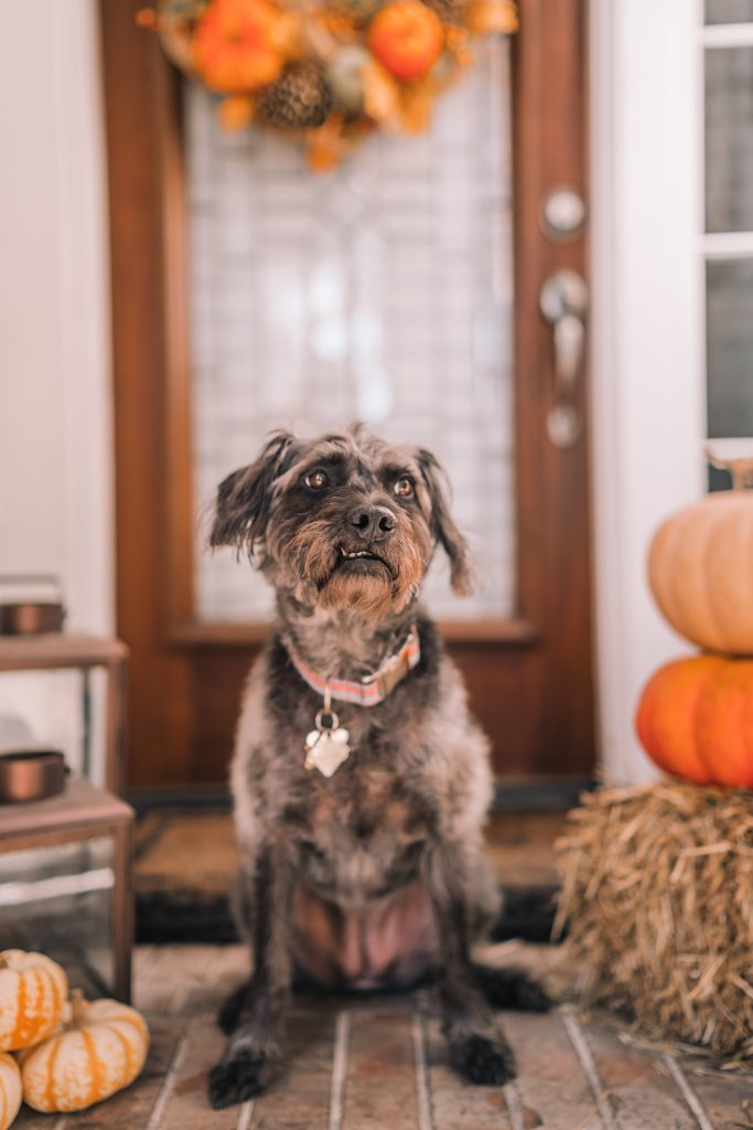 Pets at home for fall and autumn