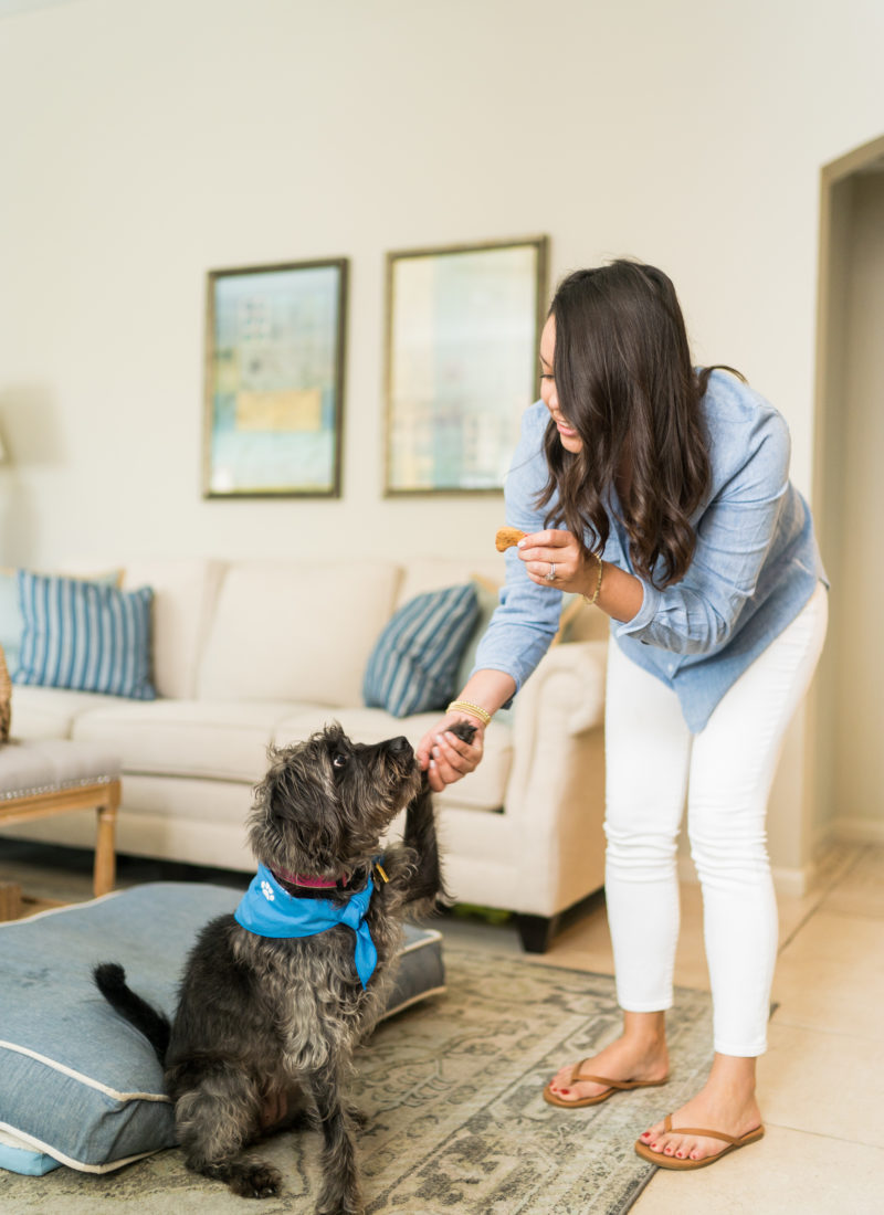 Creating a Work From Home Routine with your Dog