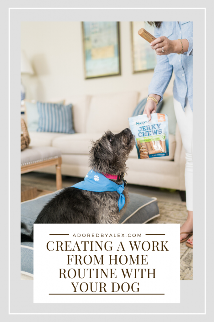 creating a work from home routine with your dog in mind